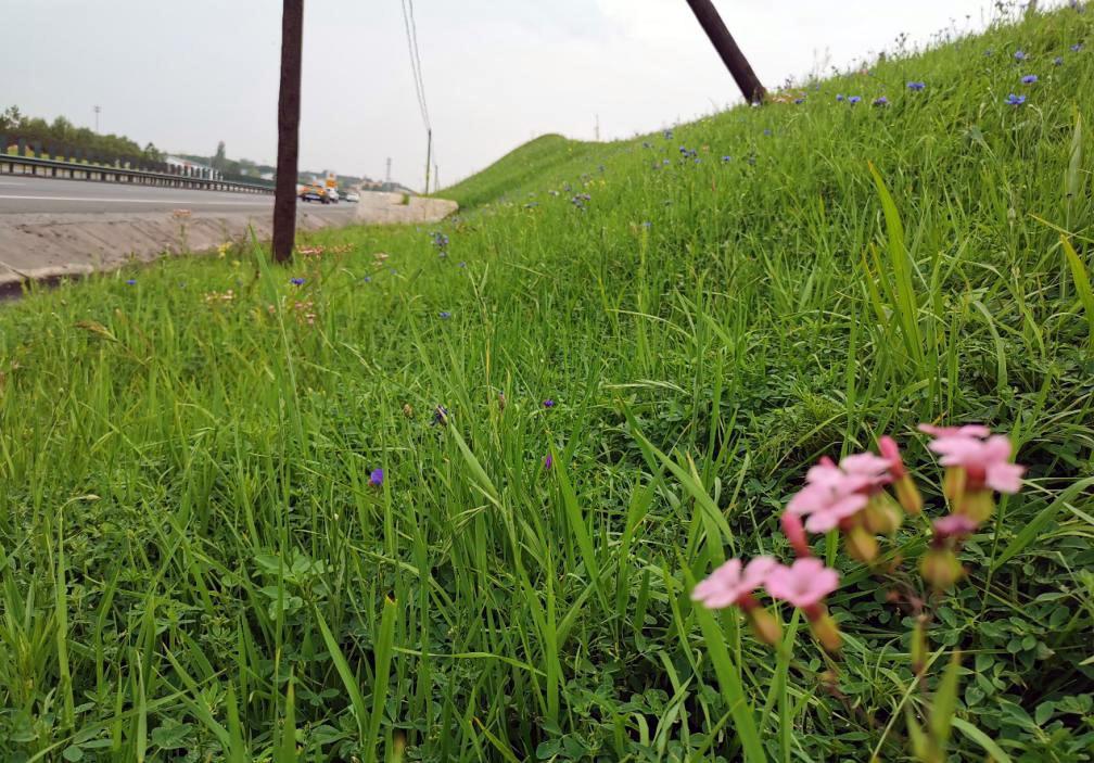 稻草植被毯护坡技术在华北公路边坡的成功运用