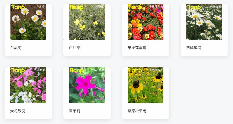 景观花卉种子-09