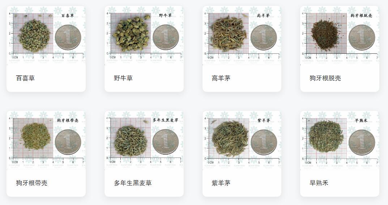 草坪种子产品列表